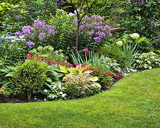 Perennial flowerbed: selection of flowers + design