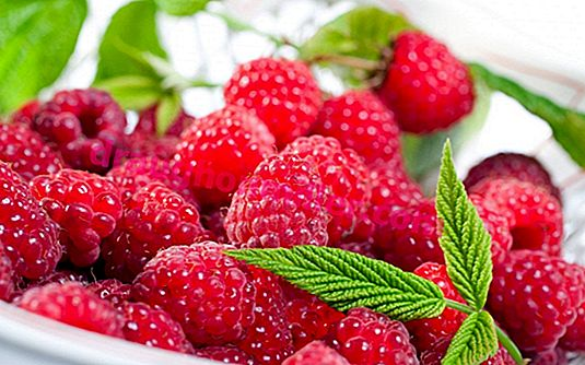 Raspberries in the suburbs: a brief overview of the best varieties