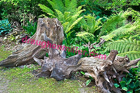 Everything about rutarium or how to make a garden from old stumps and roots with your own hands