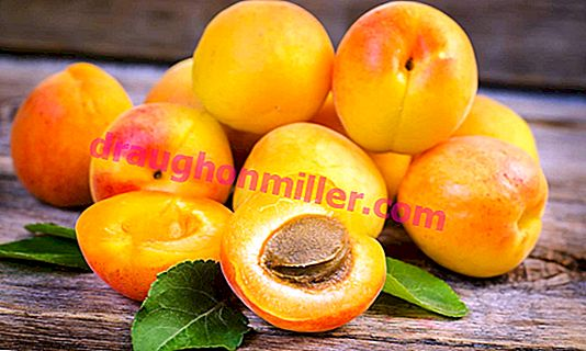"""Apricot """"Countess"""": characteristics of the variety and the rules of cultivation"""