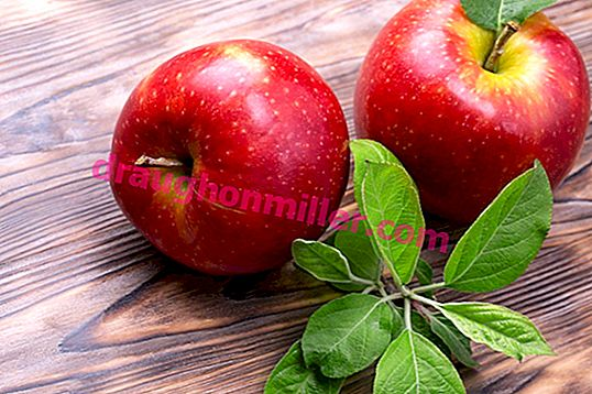 The popular variety of the apple tree Gala and its varieties