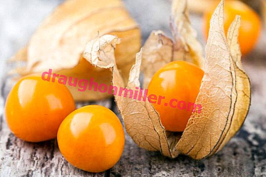 """How to grow in a seedling way delicious """"Chinese lanterns"""" of physalis?"""