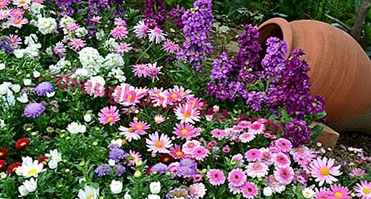 Border flowers: choose a border for flower beds and garden paths