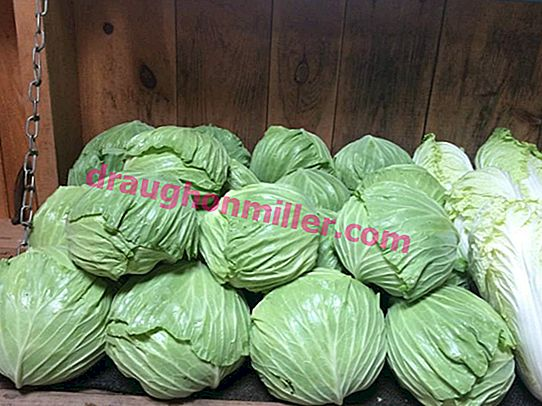 Cabbage Gift - A Proven Variety