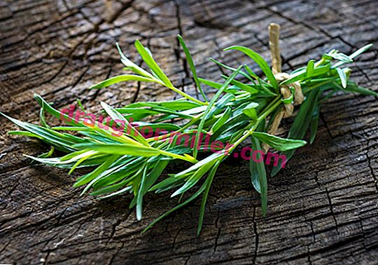 The famous tarragon: all about growing tarragon