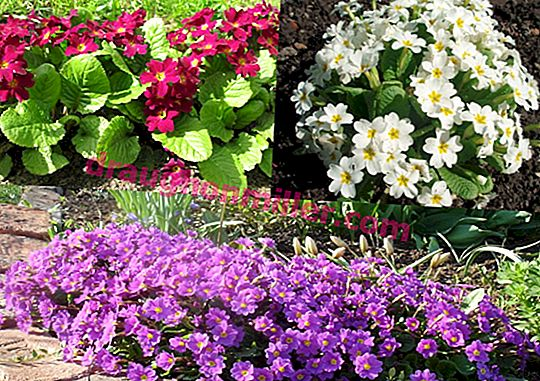 Perennial flowers for the whole summer: the best varieties for landscaping the garden