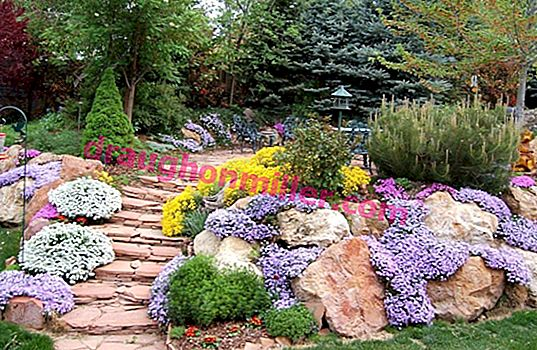 Selection of plants for an alpine hill: examples of varieties + decor rules