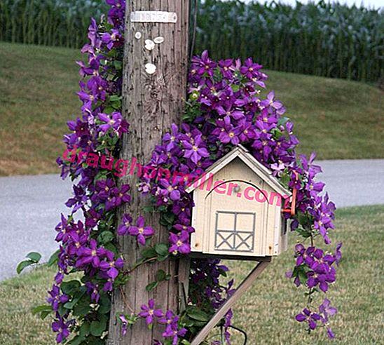 How to make a beautiful mailbox for a private home: first-hand workshops