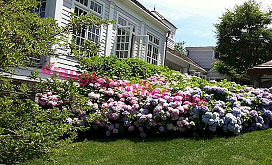 How to break a beautiful flower garden in front of the house in the country: 5 options for every taste